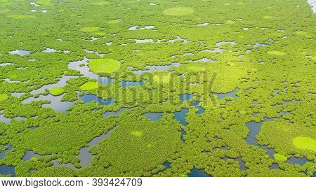 Aerial Drone Of Of Lake Baloi With Mangrove Green Tree Forest. Mindanao, Philippines.