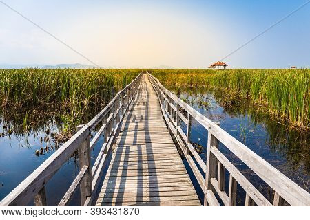 Beautiful Landscape Of Wooden Bridge Walkway In Swamp With Grass Field With Blue Sky Mountain Range
