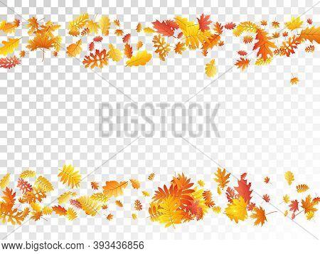 Oak, Maple, Wild Ash Rowan Leaves Vector, Autumn Foliage On Transparent Background. Red Orange Yello