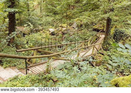 Forest paths in black forest in Germany