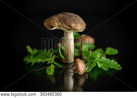 Uncultivated Organic Forest Mushrooms On Black Background