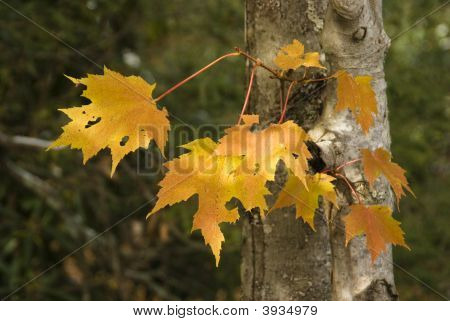 Group Of Leaves