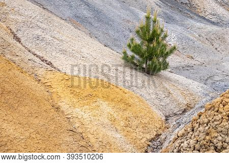 Pine Growing On The Slope Of A Clay Pit, Soil Of Different Colors. Shades Of Soil And Wood
