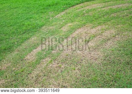 In Selective Focus Lawn Mowing Lines On Grassland With Ground Floor Background And Meadow Field