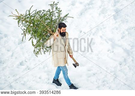 Santa Claus With Christmas Tree. Bearded Man Cutting Christmas Tree. Hipster Woodsman With Christmas