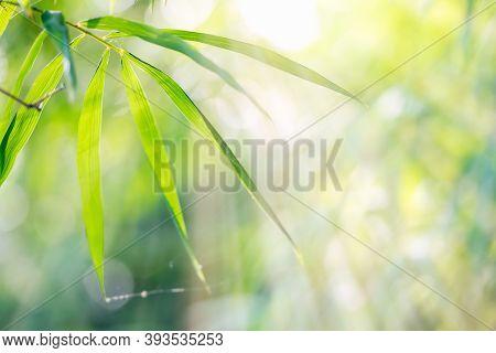Bamboo Leaves, Green Leaf On Bokeh Blurred Greenery Background. Beautiful Leaf Texture In Sunlight.
