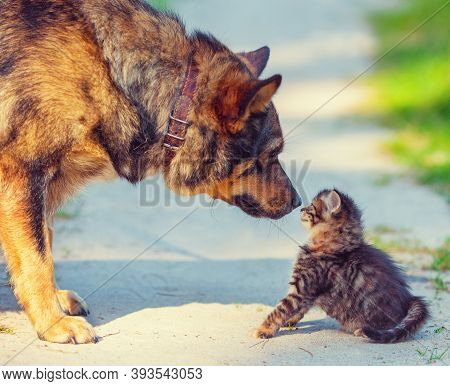 Big Dog And Little Stray Kitten Meeting Outdoors