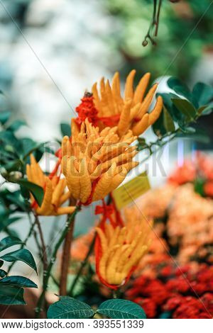 Tropical Plants In The Arboretum. Leaves And Wild Red-orange Flowers