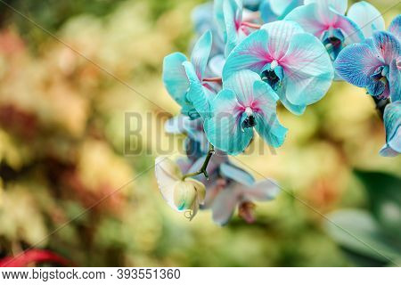 Tropical Plants In The Arboretum. Wild Blue Orchid Flowers Close Up. There Are Other Plants In The B