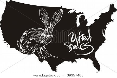 Black-tailed Jackrabbit And U.s. Outline Map