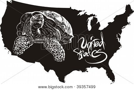 Turtle and U.S. outline map. Black and white vector illustration. poster