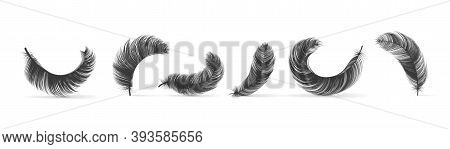 Black Feathers. Realistic Bird Swan Or Goose Silhouettes, Fluffy 3d Soft Empennage, Weightless Plume