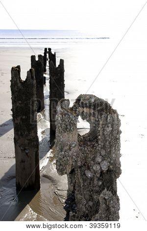Beach Breakers And Periwinkles