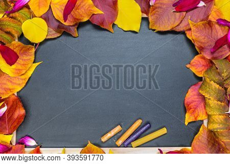 Blackboard For Study On A Background Of Fresh Autumn Leaves. The Concept Of The Beginning Of The Sch