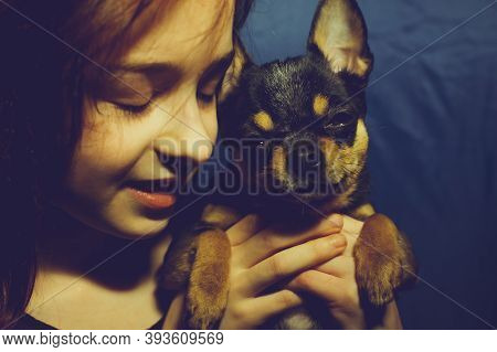 Young Girl With Pet Dog. A 9 Or 10 Year Old School Girl With A Chihuahua. A Portrait Of Girl Keeping
