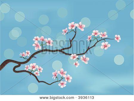 Flowered Sakura