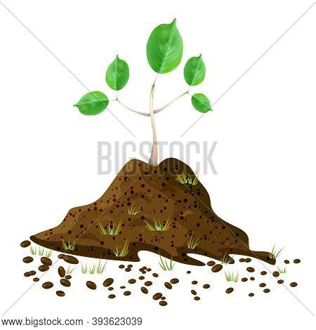 Seedling In Soil Pile Isolated On White Background. Pile Of Dirt And Growing Green Sapling. Sprout S