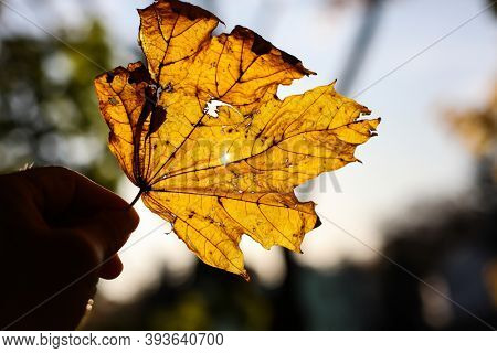 Yellow autumn leaves with sun in back