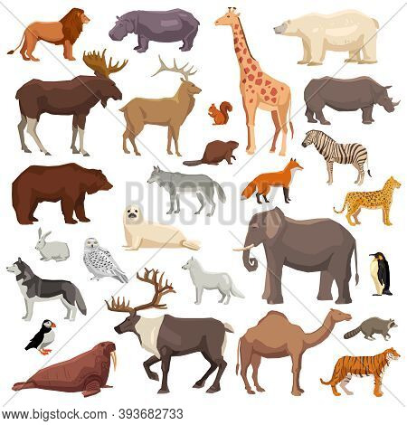 Big Flat Set Of Wild Animals And Birds Living In Various Climatic Zones Isolated On White Background
