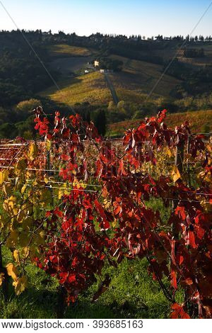 Beautiful Colorful Vineyards At Sunset During The Autumn Season In The Chianti Classico Area Near Gr