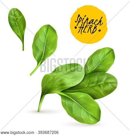 Fresh Baby Spinach Leaves Realistic Popular Vegetable Image Promoting Healthy Food Cooked And Raw He