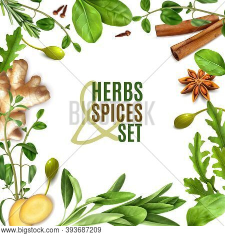 Herbs Spices Realistic Square Frame With Fresh Rosemary Thyme Rocket Spinach Leaves Cinnamon Ginger