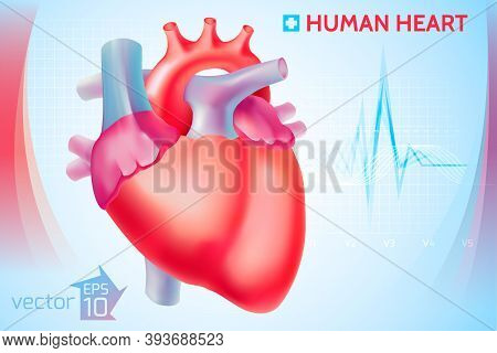 Medical Anatomical Cardio Template With Colorful Human Heart On Light Blue Background Vector Illustr
