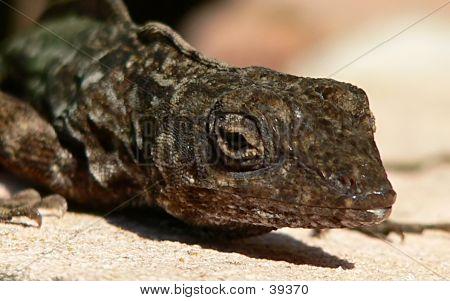 Lizard Head Shot