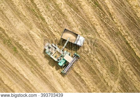 Summer Harvesting Of Crop. Agriculture Works. Combine Unloads Wheat In Machine Trailer. Work In Yell