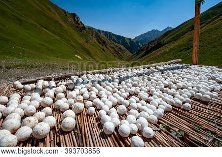 Salty Dry Kurt. National Sour Milk Product Of Central Asia Drying In Mountains Near Sary Chelek Lake