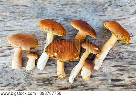 Several Boletus Mushrooms On A Dark Wooden Table. (latin Name - Boletaceae) Top View