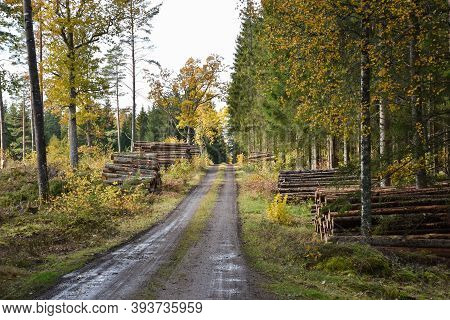 Woodpiles By A Beautiful Forest Road In Fall Season In The Province Smaland In Sweden