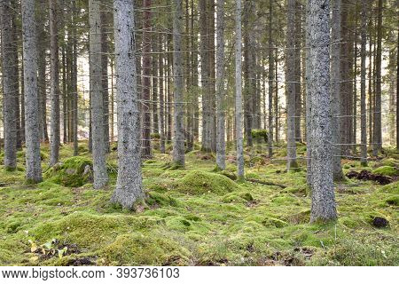 Green Mossy Ground In A Beautiful Forest