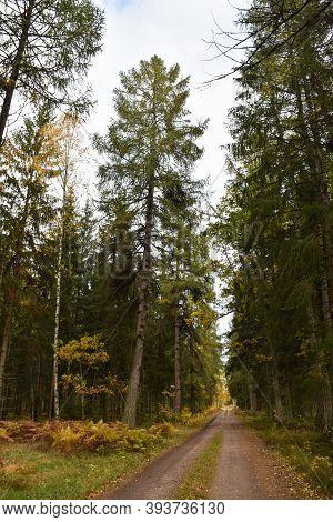 Gravel Road Through The Woods In Fall Season