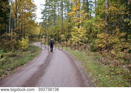 Hiker On A Winding Gravel Road In The Woods In Fall Season