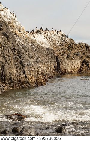 Cliff Full Of Birds, Marine Fauna, Dirty Cliff Covered With The Guano, Yaquina Bay, Or, Usa