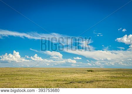 Prairies Are Ecosystems Considered Part Of The Temperate Grasslands, Savannas, And Shrublands Biome
