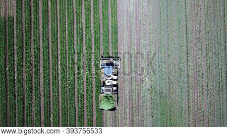 Soybean Harvest At Spring Season. Agricultural Landscape.