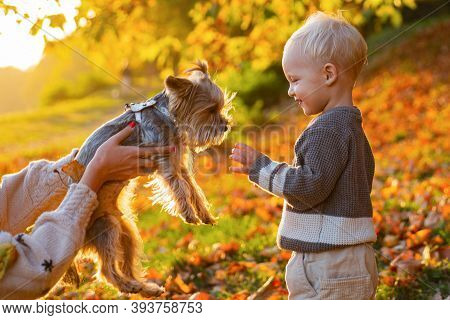 Child Play With Yorkshire Terrier Dog. Toddler Boy Enjoy Autumn With Dog Friend. Small Baby Toddler