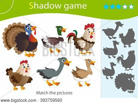 Shadow Game For Kids. Match The Right Shadow. Color Images Of Farm Animals. Poultry. Turkey, Goose,