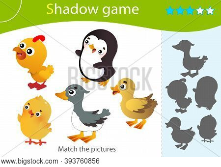 Shadow Game For Kids. Match The Right Shadow. Color Images Of Birds. Duckling, Chick, Gosling, Turke