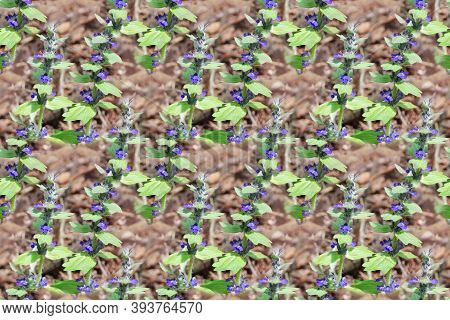 Horizontal Background With Forest Flowers Ajuga Reptans