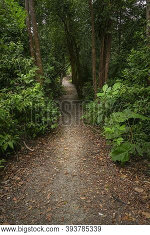 Hiking Trail Inside A Beautiful Lush Green Tropical Forest In South East Asia