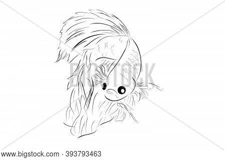 Outline Vector Betta Or Siamese Fighting Fish, Giant Half Moon, On Whitebackground.