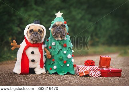 Dogs In Christmas Costumes. Two French Bulldogs Dresses Up As Funny Christmas Tree And Snowman With