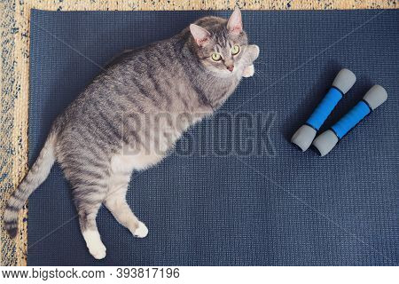 Fat Cat Is Lying On The Workout Mat Next To The Sports Dumbbells. Concept Of Keeping Fit And Yoga Du