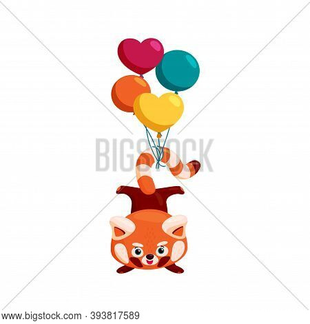 Red Panda Handstand. Red Panda With Balloons On Its Tail. Colorful Vector Illustration In Cartoon St