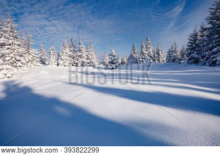 Winter landscape with spruces in snow in frosty day. Location place Carpathian mountains, Ukraine, Europe. Wintry wallpapers. Christmas holiday concept. Happy New Year! Discover the beauty of earth.