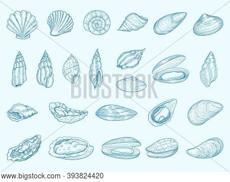 Oyster Delicious. Gourmet Shells For Eating Diet Seafood French Traditional Cuisine Vector Oyster Il