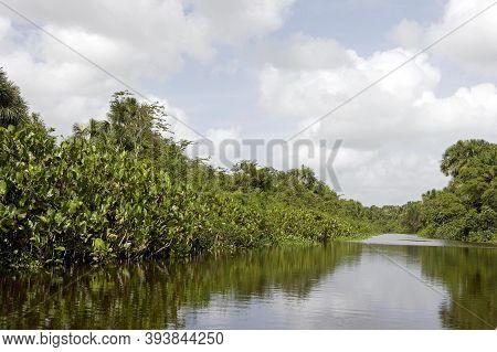 Orinoco Delta In Venezuela Orinoco Delta In Venezuela